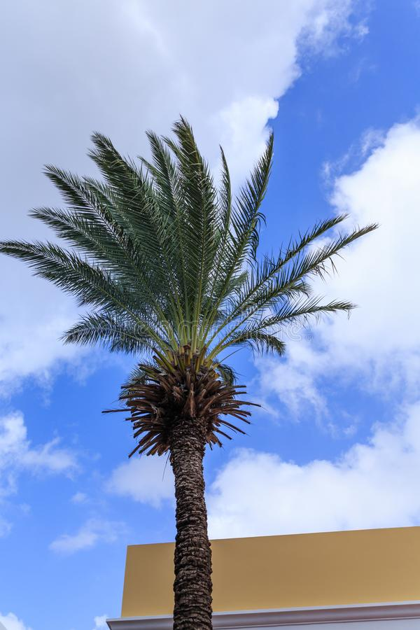 Date Palm Tree in Curacao Sky stock images
