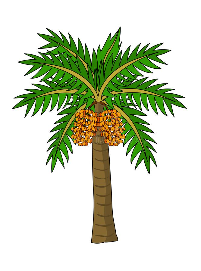 Date Palm Tree vector illustration. Isolated on white background vector illustration