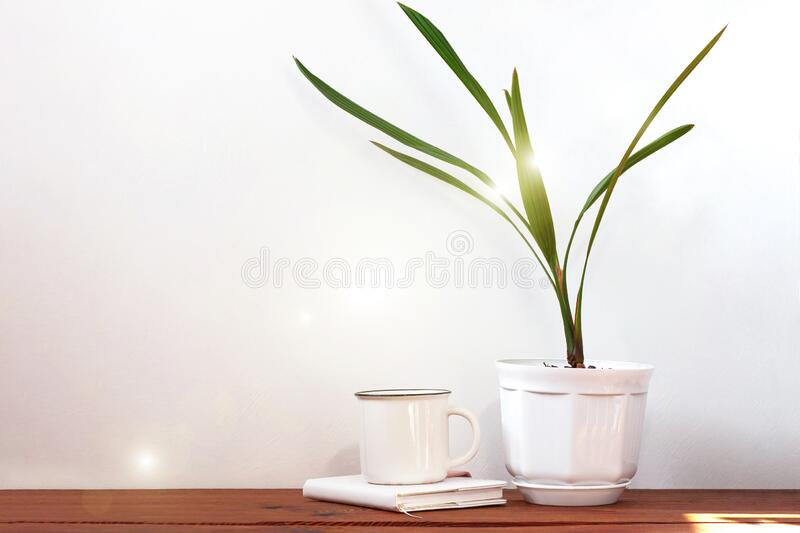 Date palm tree in white pot. Minimalistic home interior decor, urban jungle. Earth day, eco workspace house concept. Creative plants space in minimal style stock photos