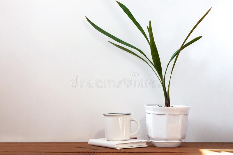 Date palm tree in white pot. Minimalistic home interior decor, urban jungle. Earth day, eco workspace house concept. Creative plants space in minimal style stock image