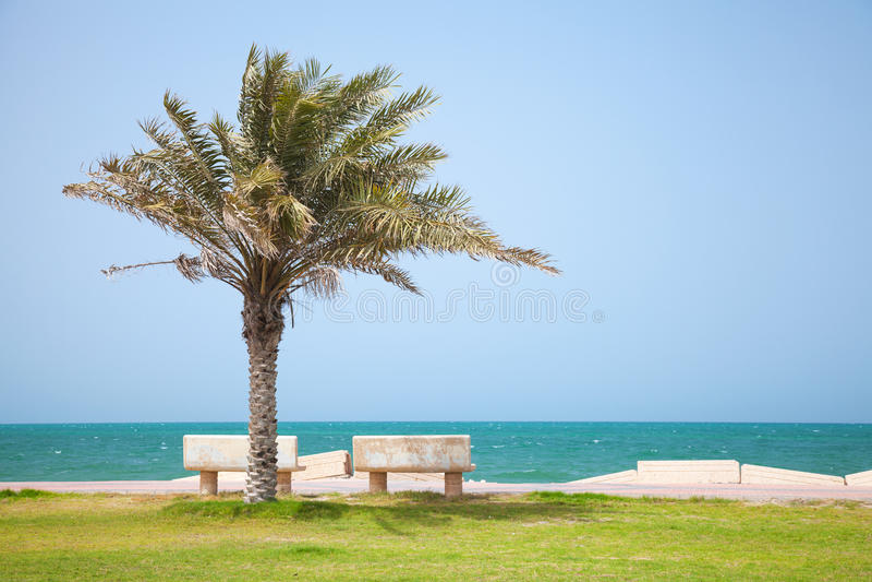Date tree on coast of Persian Gulf, Saudi Arabia stock images