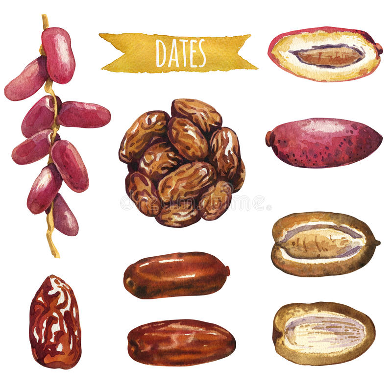 Dates, hand-painted watercolor set. Clipping paths included stock illustration