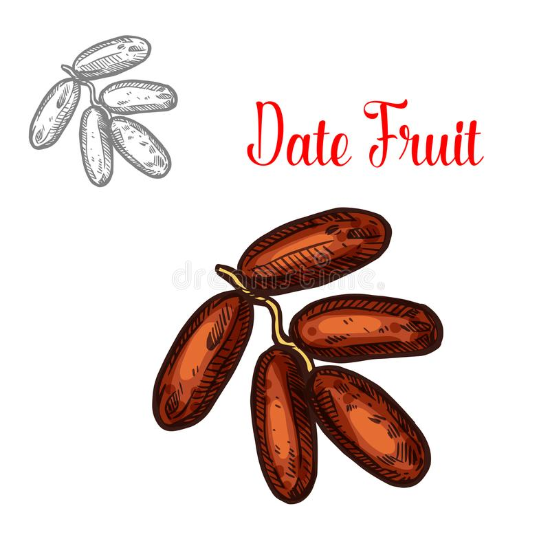 Dates Palm Trees And Fruit - Vector Illustration Royalty Free Cliparts,  Vectors, And Stock Illustration. Image 78076712.