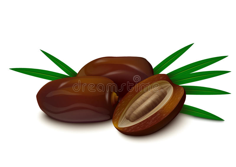 Dates on white background. Two whole dates, half of date with seed, palm leaves on white background. Vector illustration stock illustration