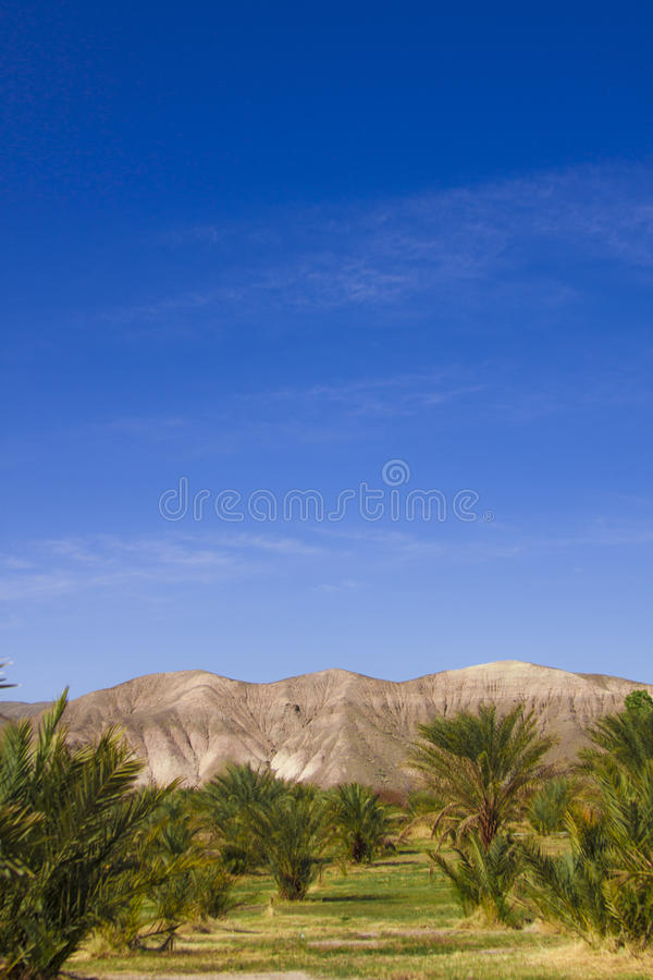 Datez les arbres en parc de nation de Death Valley, la Californie photo stock