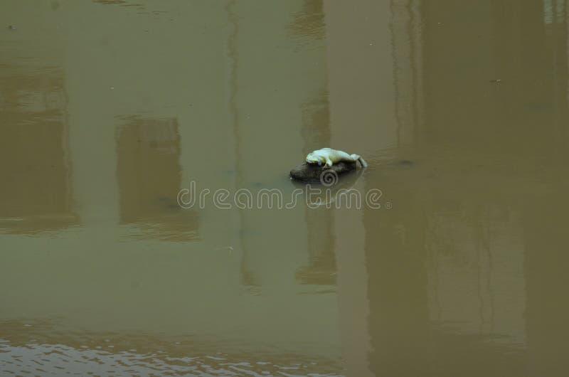 Dath frog stock image