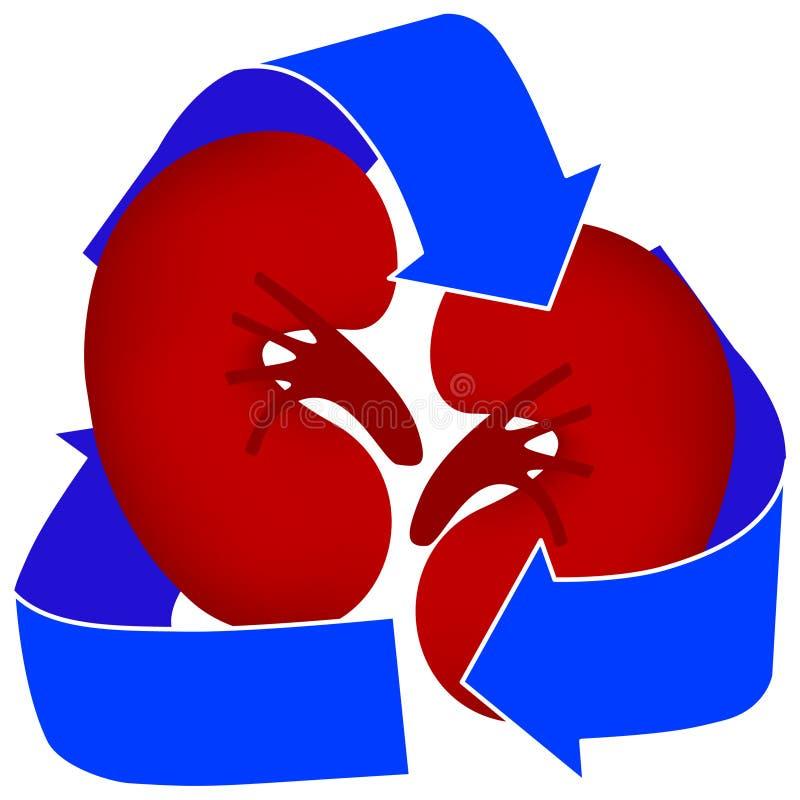 datki ikony nerki organu ilustracja wektor