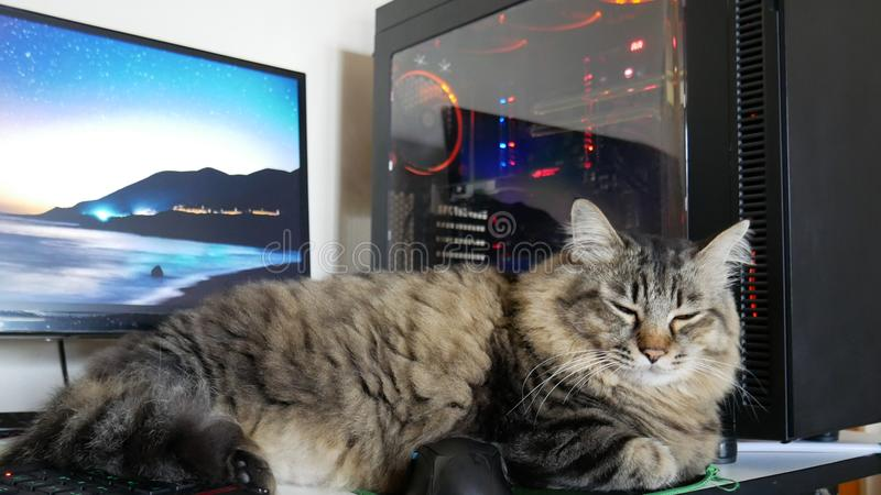 Dator för kattsömnframdel royaltyfri fotografi