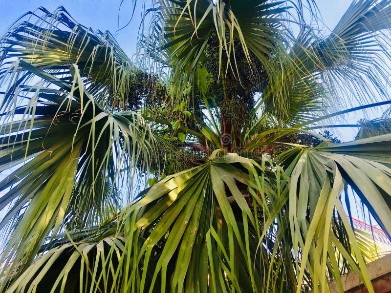 Datuje drzewnego piękno zdjęcie royalty free