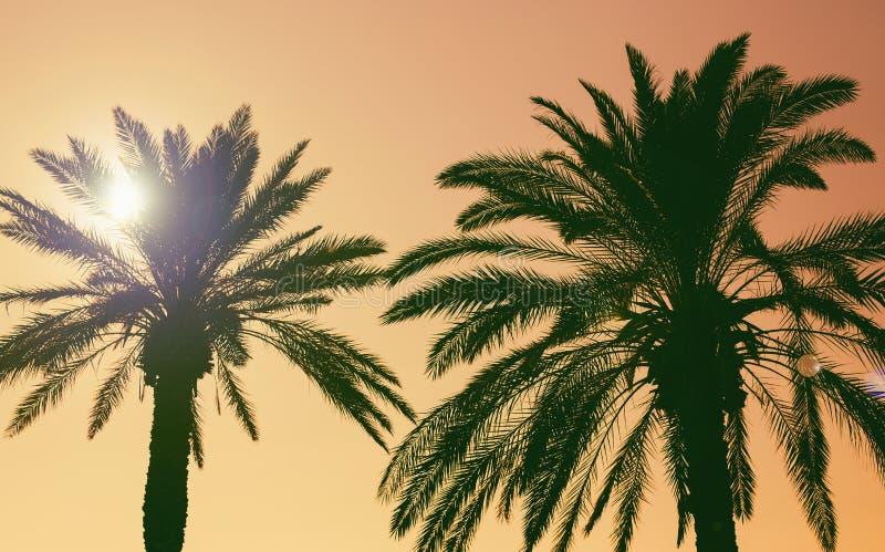 Datumpalm mot färgstarkt himmel med solnedgång Vackers bakgrund Sommarsemester, resor och tropisk strand royaltyfri bild
