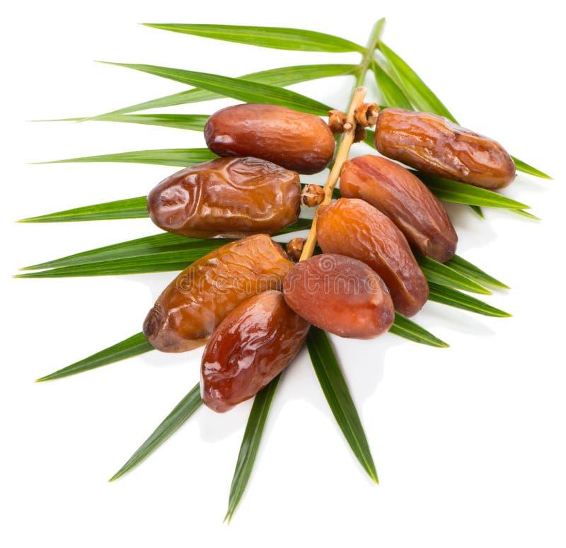 Datumvruchten en blad van palm stock foto