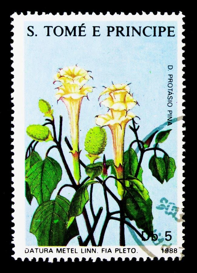 Datura, serie delle piante medicinali, circa 1988 fotografie stock libere da diritti