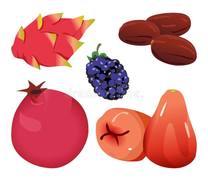 Daty, Dragonfruit, czernica, granatowiec i Różany Apple, ilustracji