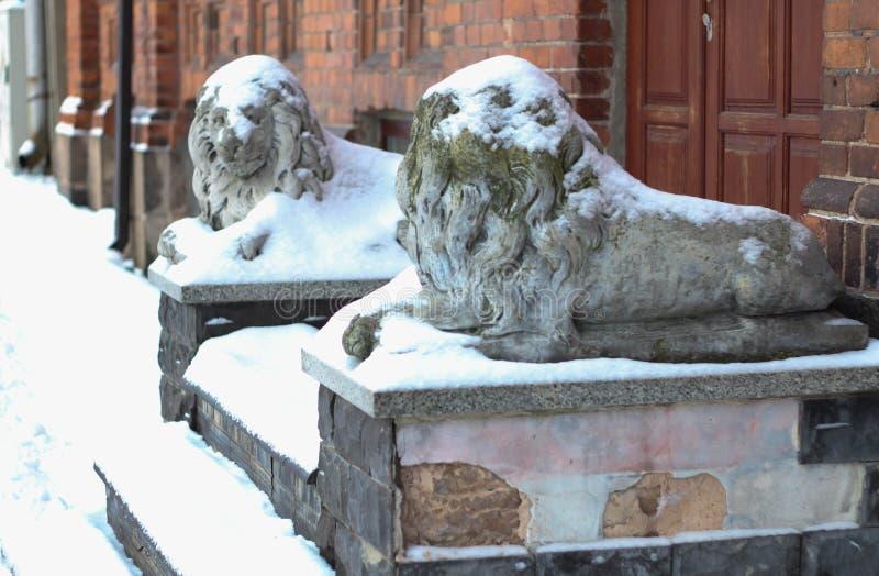 Daugavpils, Letland, Europa Sneeuw op het leeuwstandbeeld dat wordt behandeld De winter is één van de beste tijden om in lange ga stock afbeelding