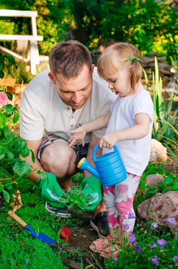 Daughter and father watering succulent planting in the garden royalty free stock photos