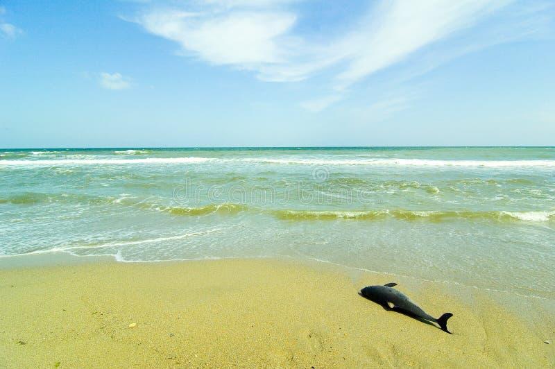 Download Dauphin mort image stock. Image du bleu, poissons, afterlife - 732665