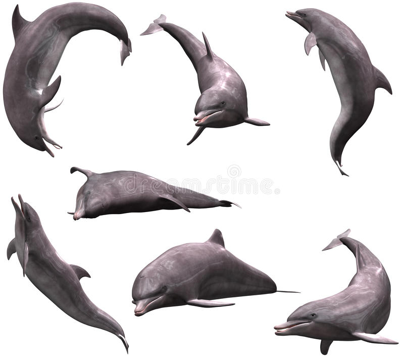 Dauphins illustration de vecteur