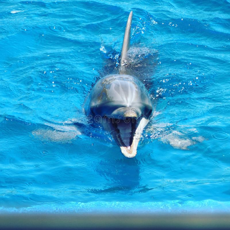 dauphins photographie stock