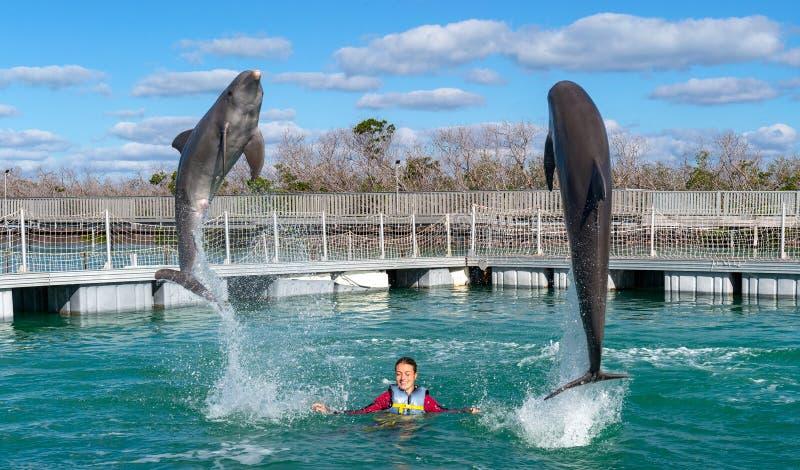Dauphins branchants Natation de femme avec des dauphins dans l'eau bleue images libres de droits