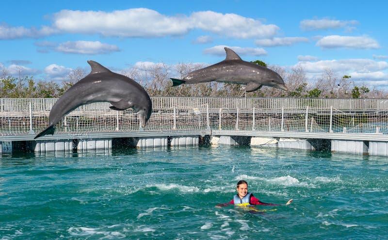 Dauphins branchants Natation de femme avec des dauphins dans l'eau bleue photo stock