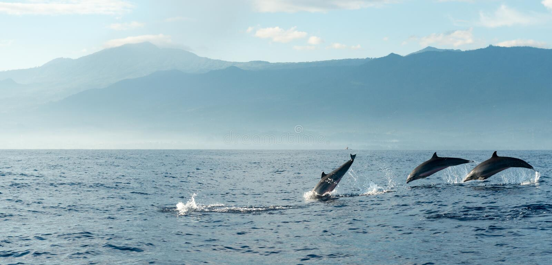 Dauphins dans l'océan pacifique photos stock