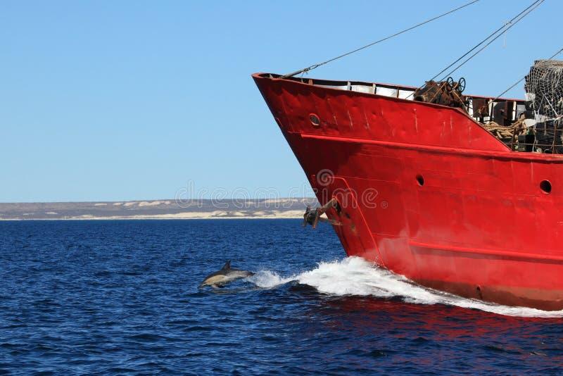 Dauphins de Puerto Madryn en Argentine photos stock