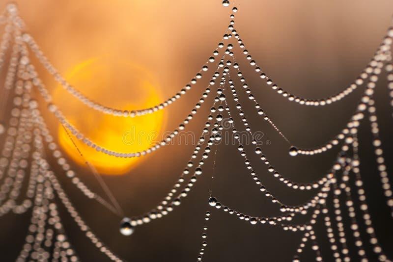 Dauw-behandeld spiderweb royalty-vrije stock fotografie