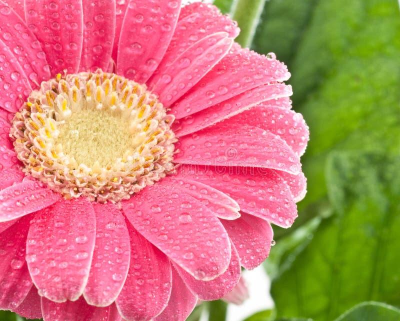 Dauw behandelde bloem royalty-vrije stock foto's
