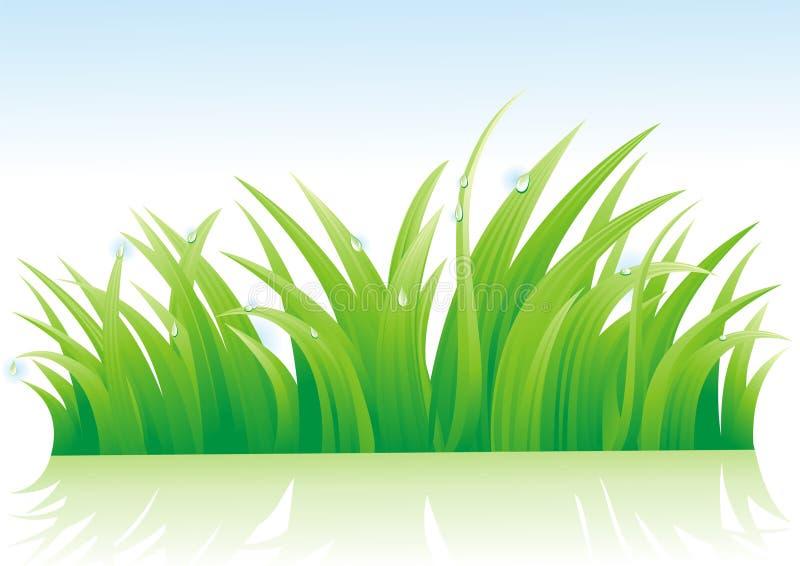 Dauw op een gras royalty-vrije illustratie