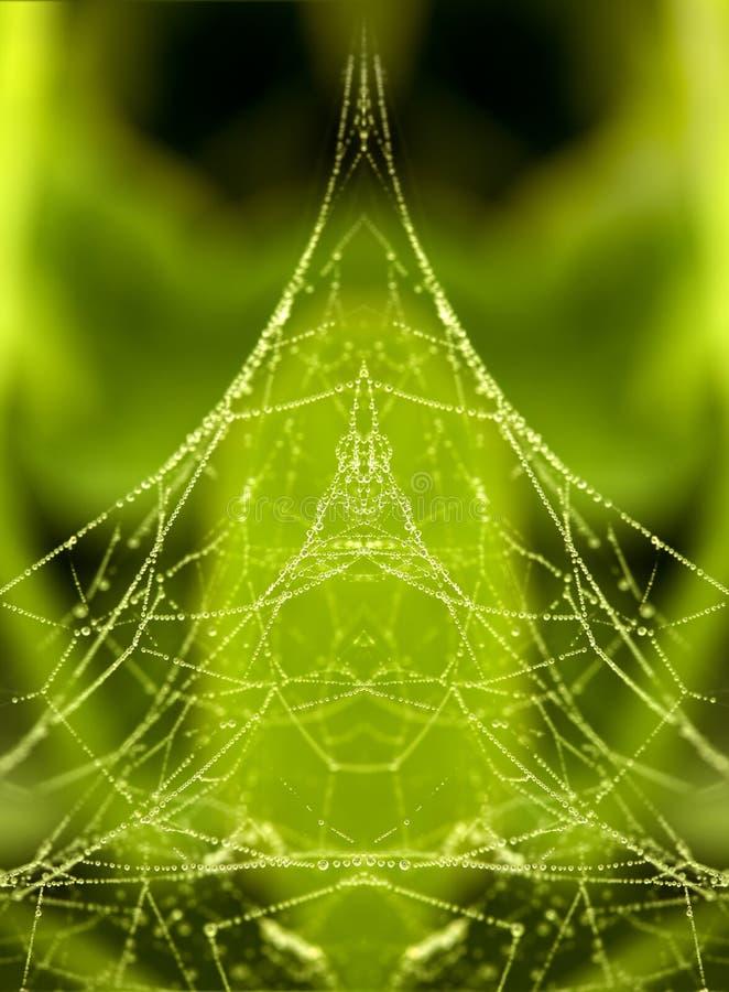 Dauw op een spinneweb stock afbeeldingen