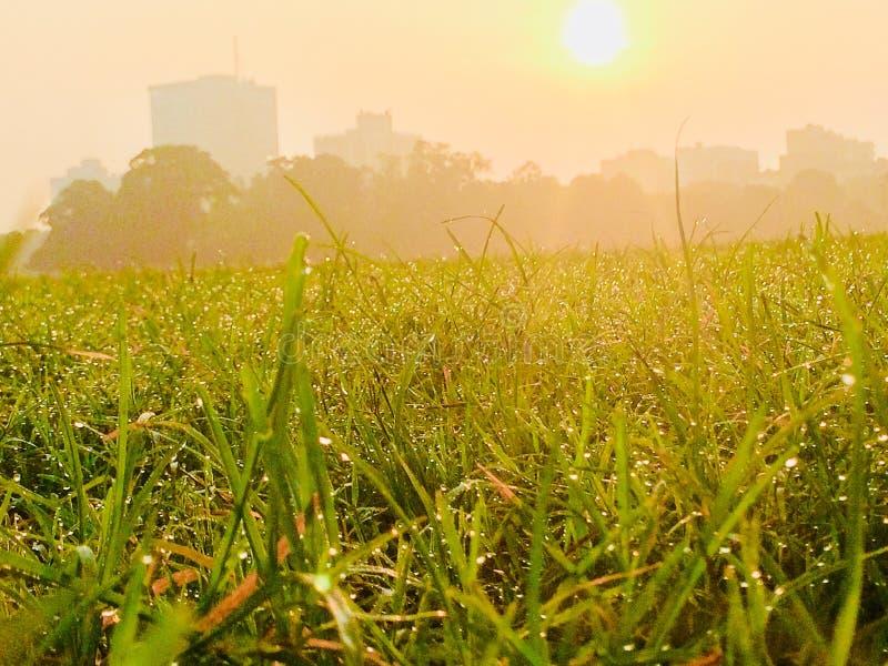 Dauw op gras stock afbeeldingen