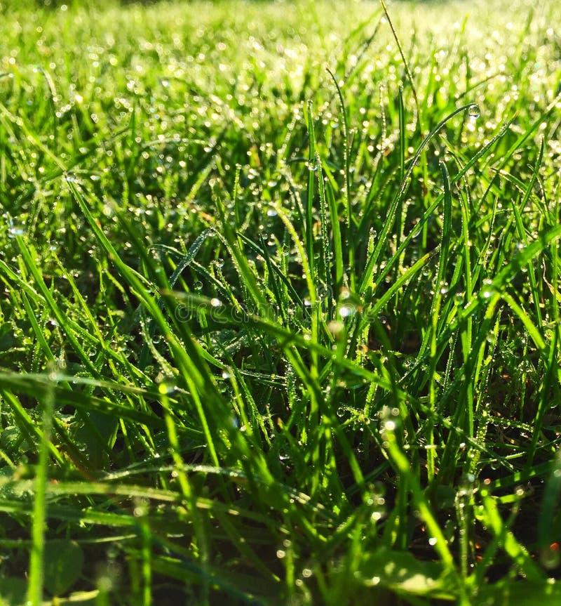 Dauw op gras in de ochtend royalty-vrije stock foto's