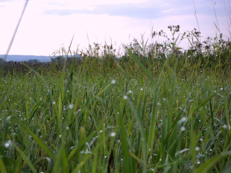 Dauw op het gras stock fotografie