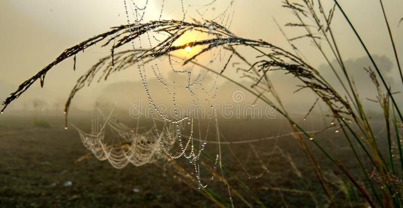 Dauw op spinneweb in ochtend in wintertijd royalty-vrije stock afbeelding