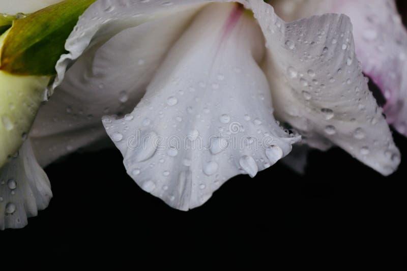 Dauwdaling op een bloem sluit omhoog van een donkergroene blad en een bloem royalty-vrije stock foto