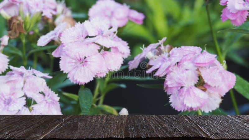 dauwdaling op roze bloem in gebied & x28; onduidelijk beeld image& x29; met geselecteerde focu stock foto's