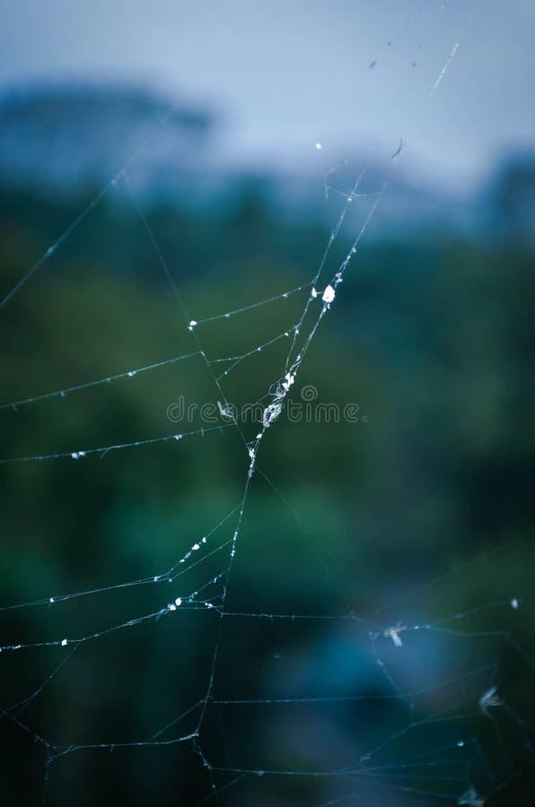Dauwdruppel, spiderweb royalty-vrije stock fotografie