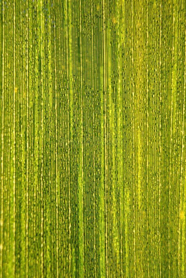 Dauwdruppels over een groen blad I stock afbeeldingen