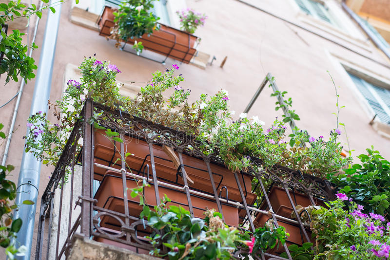 Davanzale con i fiori, vista dal basso della finestra immagine stock