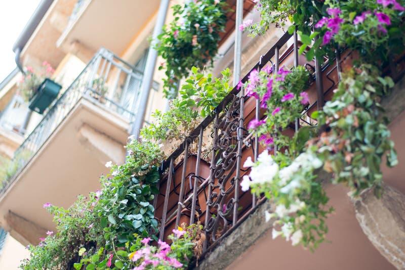 Davanzale della finestra con i fiori immagine stock