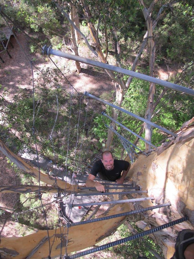 Dave Evans Bicentennial Tree, in Warren National Park, Westelijk Australië stock fotografie