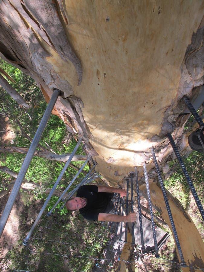 Dave Evans Bicentennial Tree, in Warren National Park, Westelijk Australië royalty-vrije stock fotografie