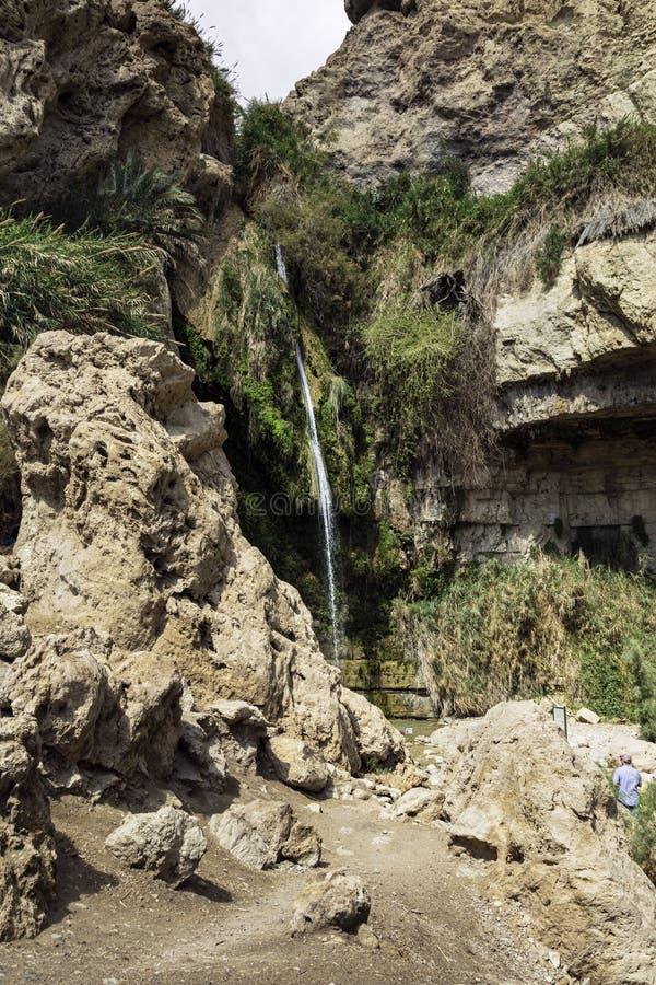 David Falls em Nahal David no parque de Ein Gedi em Israel foto de stock royalty free