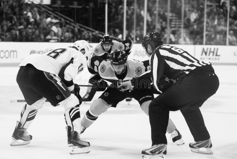 David Krejci and Mark Recchi, Boston Bruins stock images