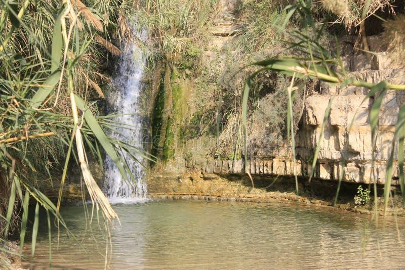David Stream Water Fall in Ein Gedi, Judea-Woestijn in het Heilige Land, Israël stock foto