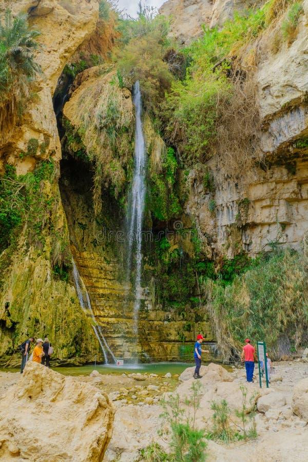 David Waterfall in het Natuurreservaat van Ein Gedi stock fotografie
