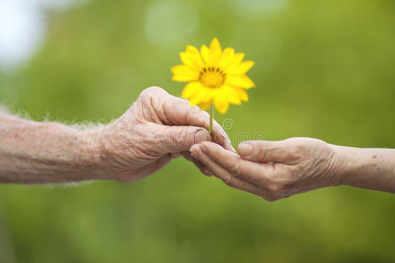 Dawać kwiatu zdjęcie royalty free