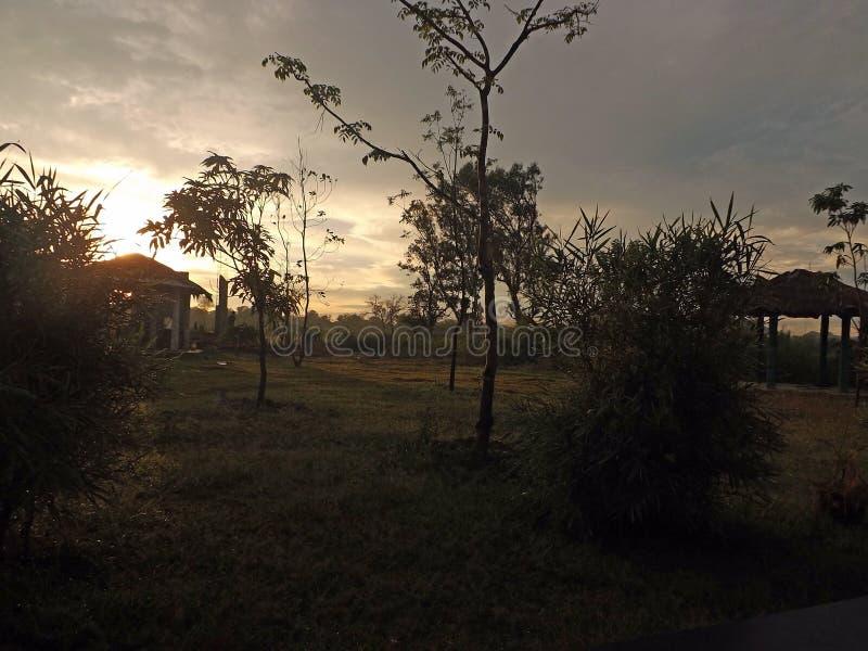 Dawn, ανατολή, δέντρα, οι Μπους, καφετιοί, ουρανός, χλόη, ξενοδοχείο, πεζούλι, πρωί, ταξίδι, δάσος, φύση, φως, ροζ, διακοπές στοκ εικόνες