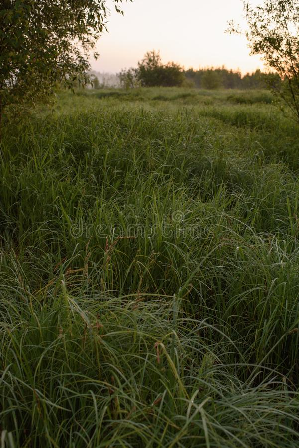 Dawn σε έναν τομέα στοκ εικόνες