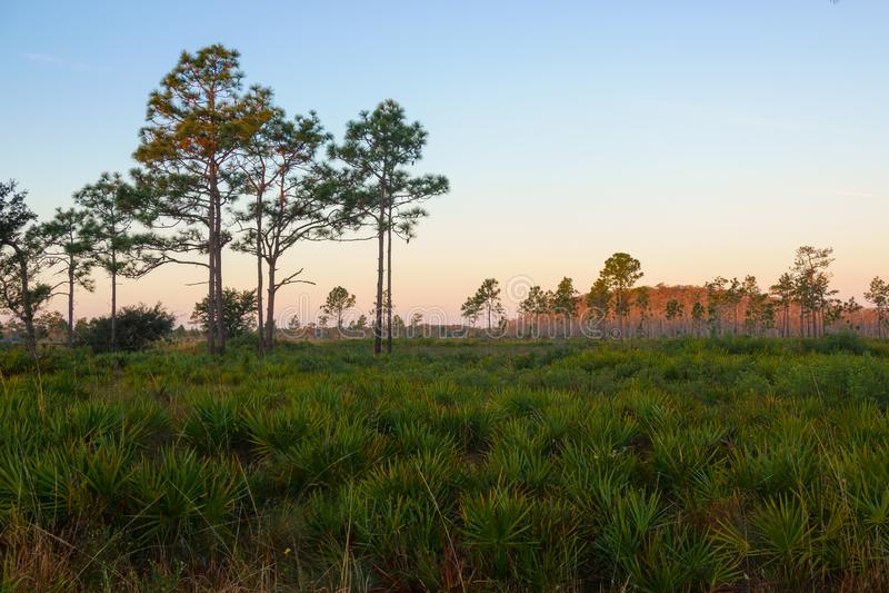 Dawn στη διοικητική περιοχή άγριας φύσης τριών λιμνών, Φλώριδα στοκ φωτογραφία με δικαίωμα ελεύθερης χρήσης